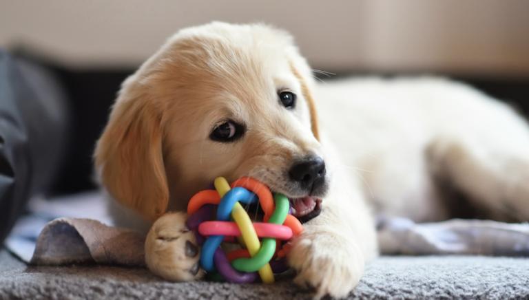Köpek Oyuncakları